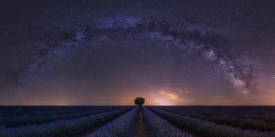 Color y fragancia bajo las estrellas