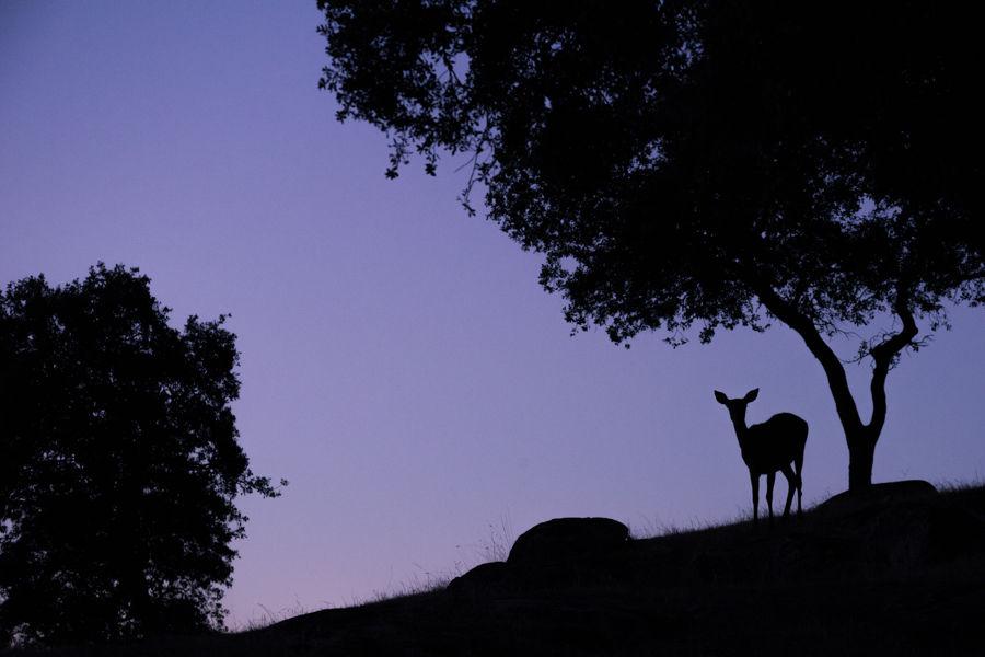 Esperando el amanecer