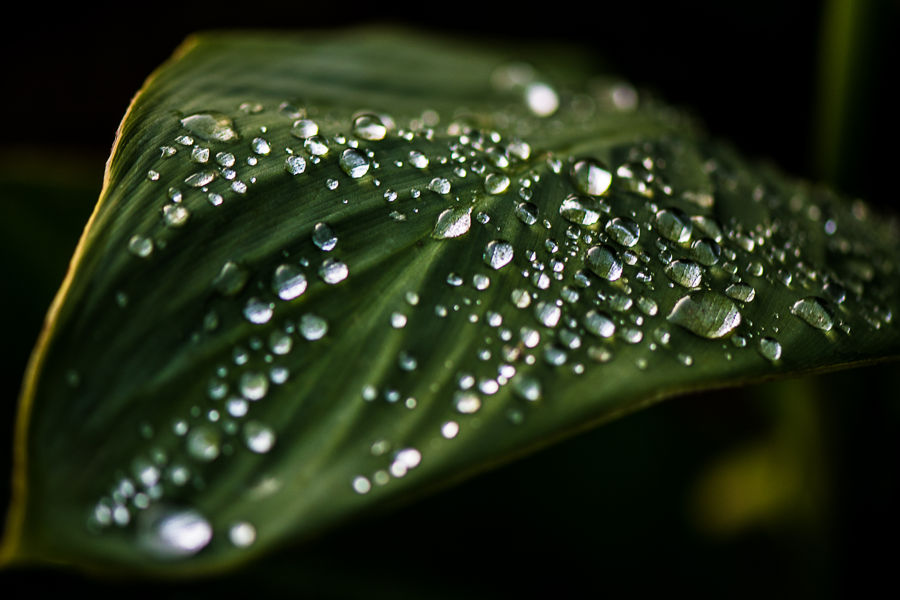 Tras la lluvia