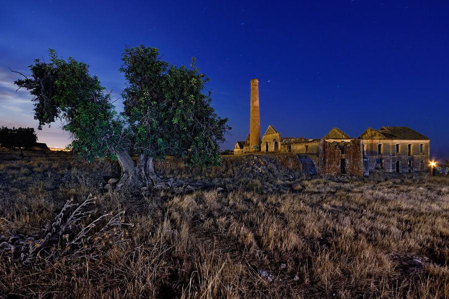 Arbol y Antigua Fábrica