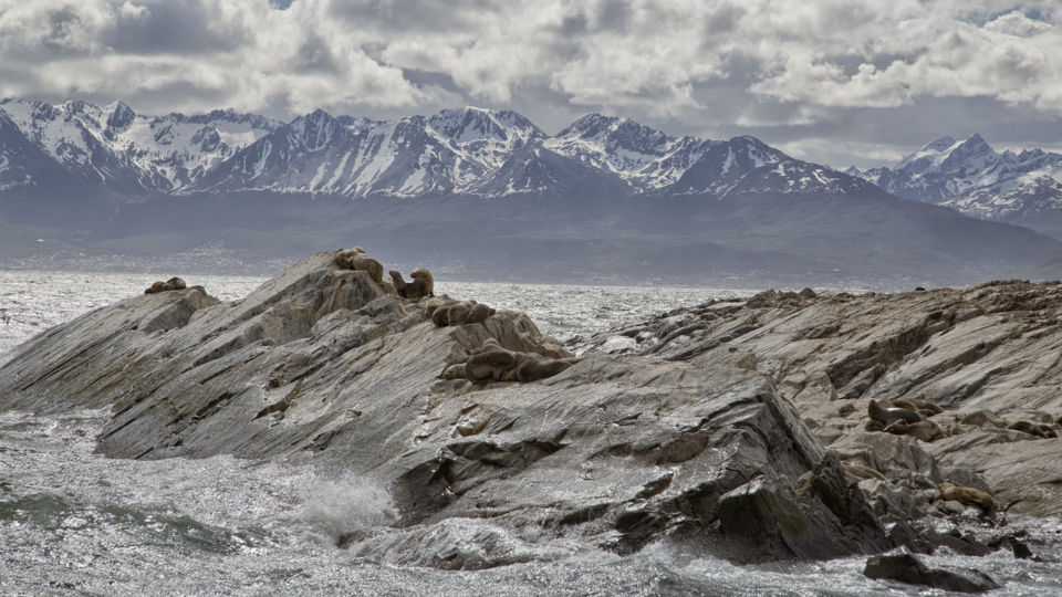 Leones marinos en el Canal de Beagle-Argentina