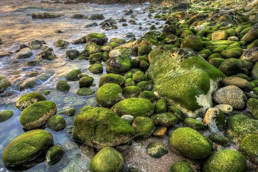 Algas en las rocas