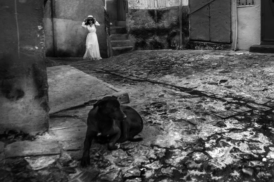 La Dama y el Perro II