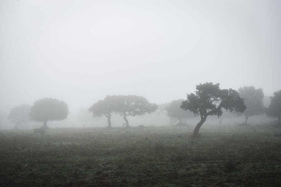 Perdido en la niebla