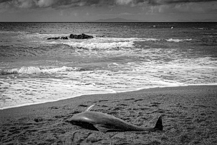 ¿Por qué mueren los delfines?