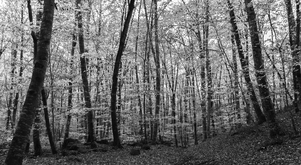 Troncos, hojas