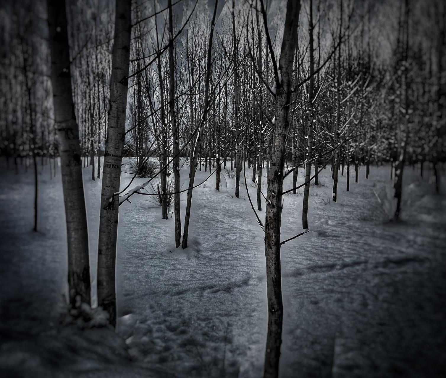 La soledad del invierno