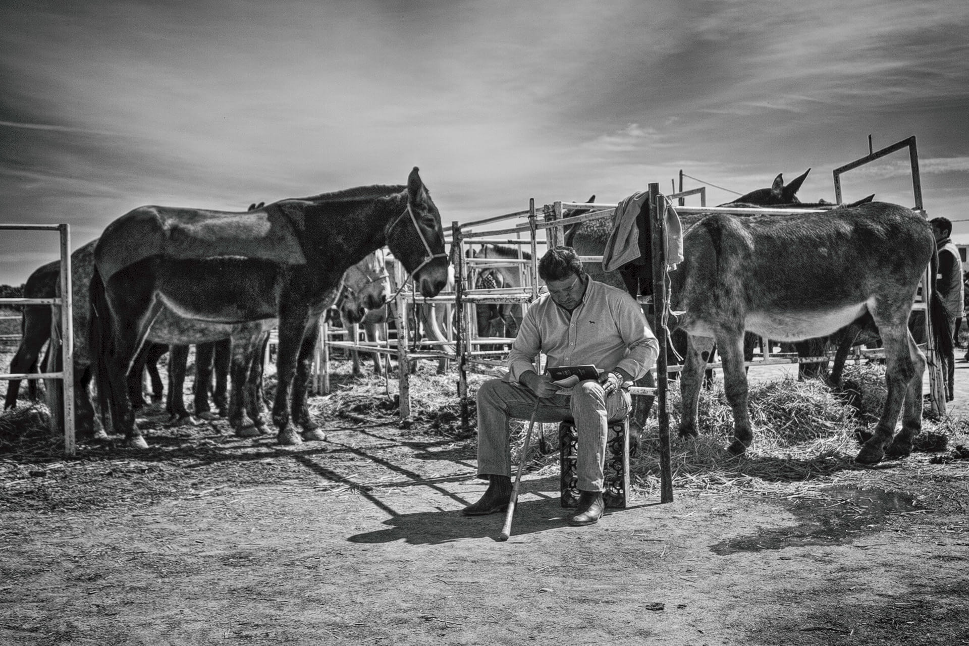 tratante de ganado en feria Agroganadera de Los Palacios y Villafranca