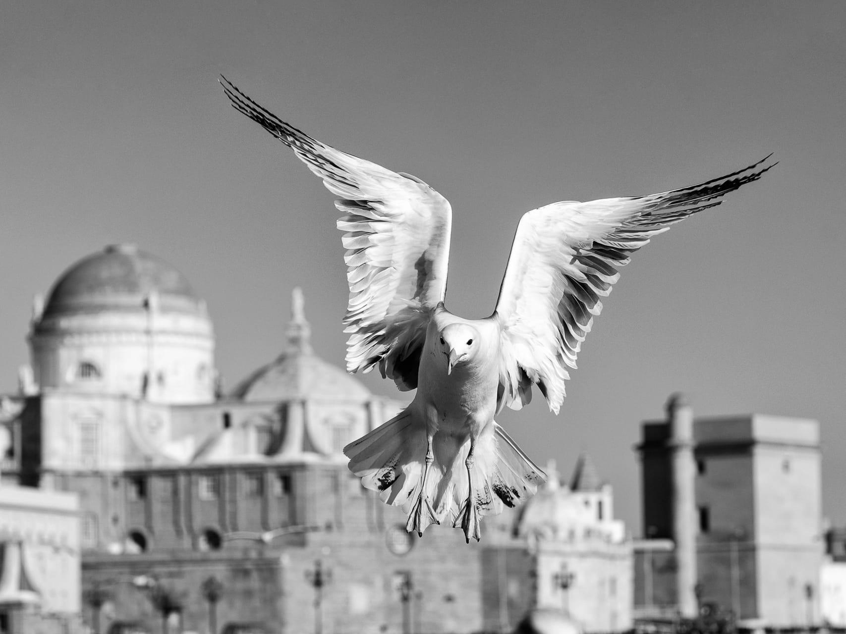 Cádiz a vista de Pájaro