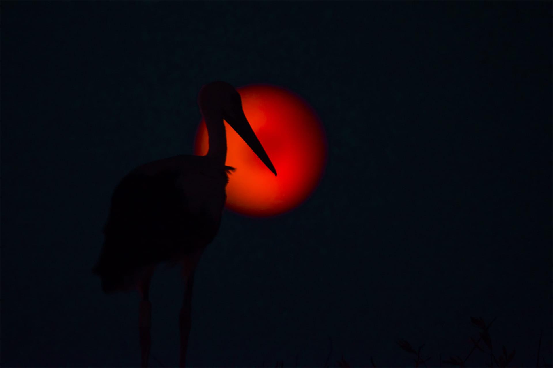 doble eclipse con la luna de sangre