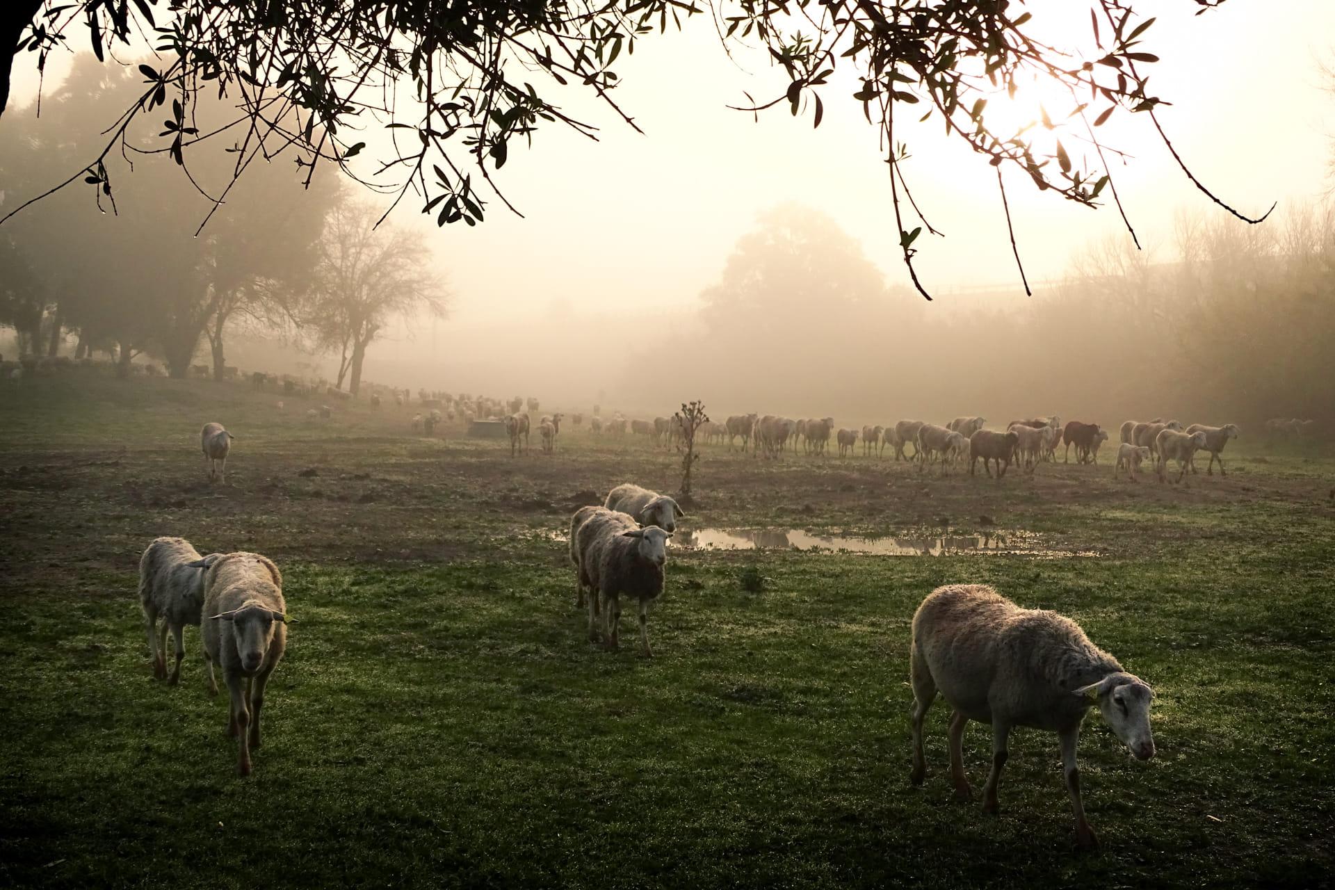 Paseando en la niebla
