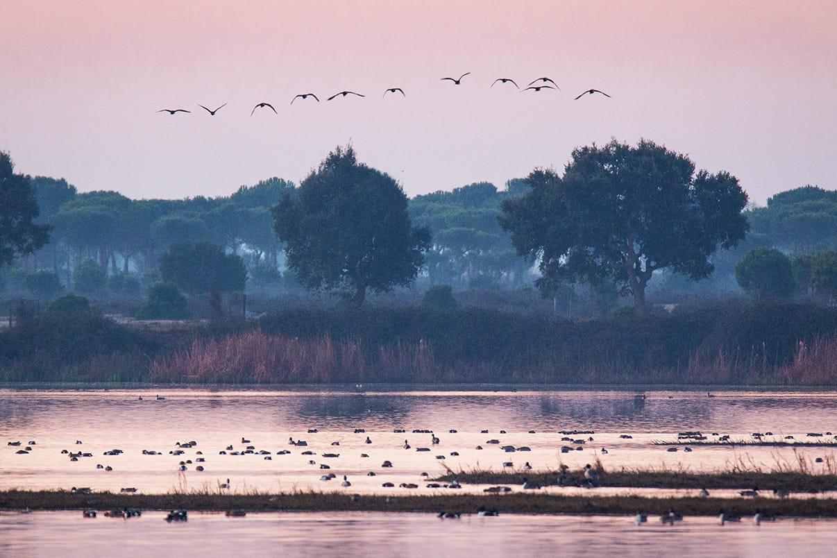El despertar de Doñana