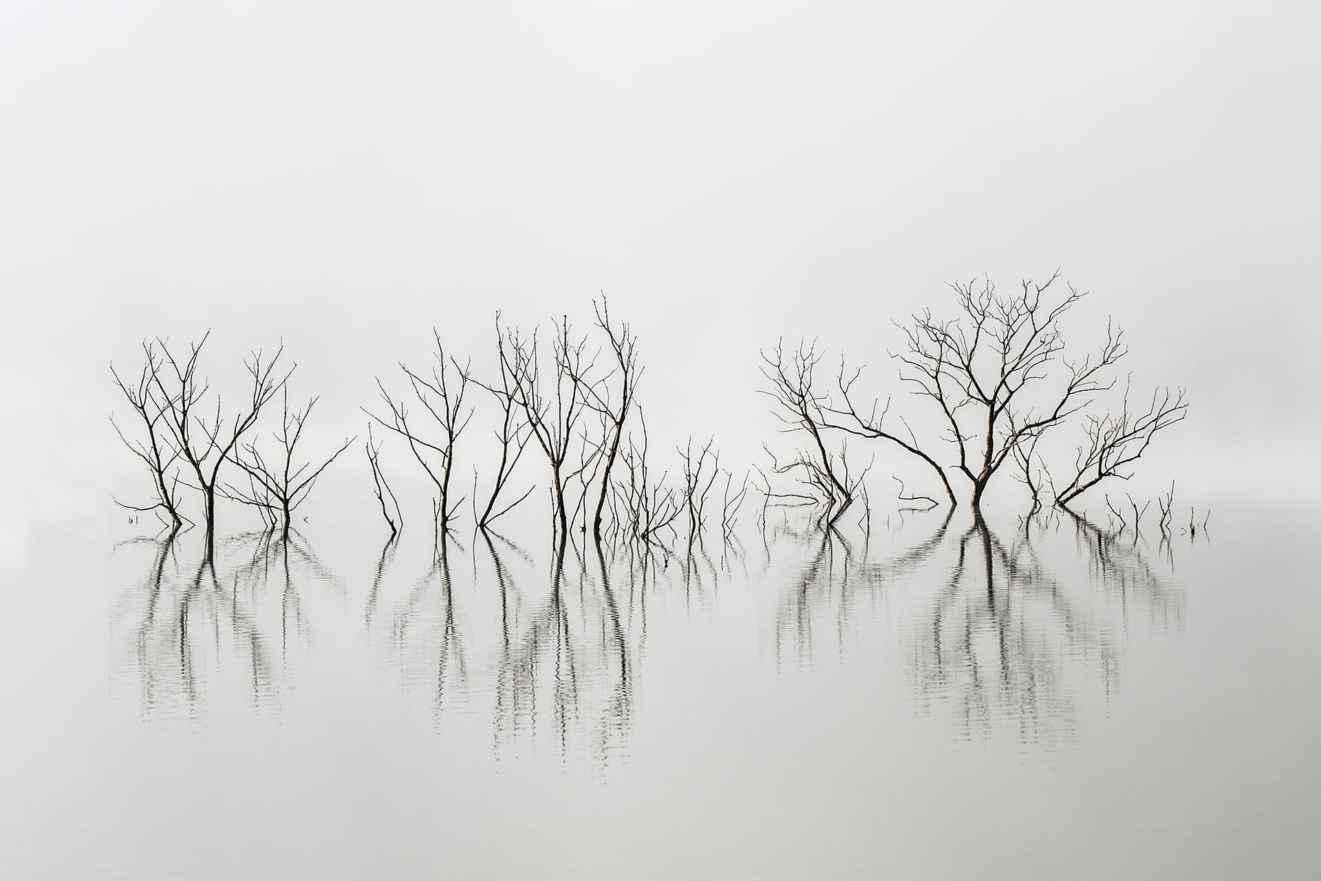 Momentos de Nieblas y Silencio