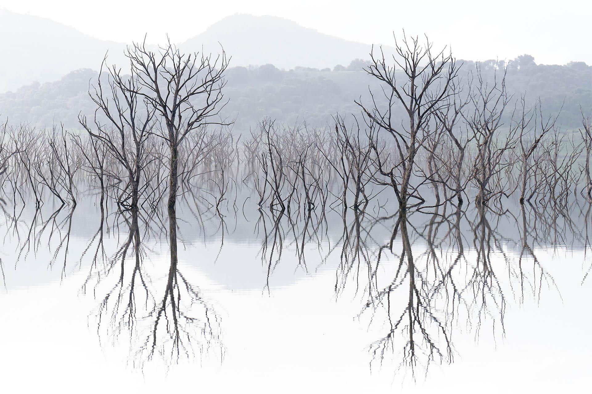 Bruma, simetría y naturaleza