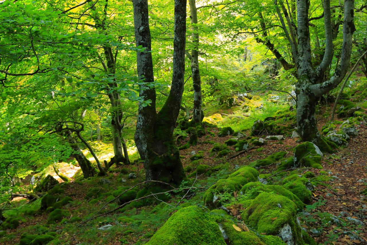 El bosque otoñal