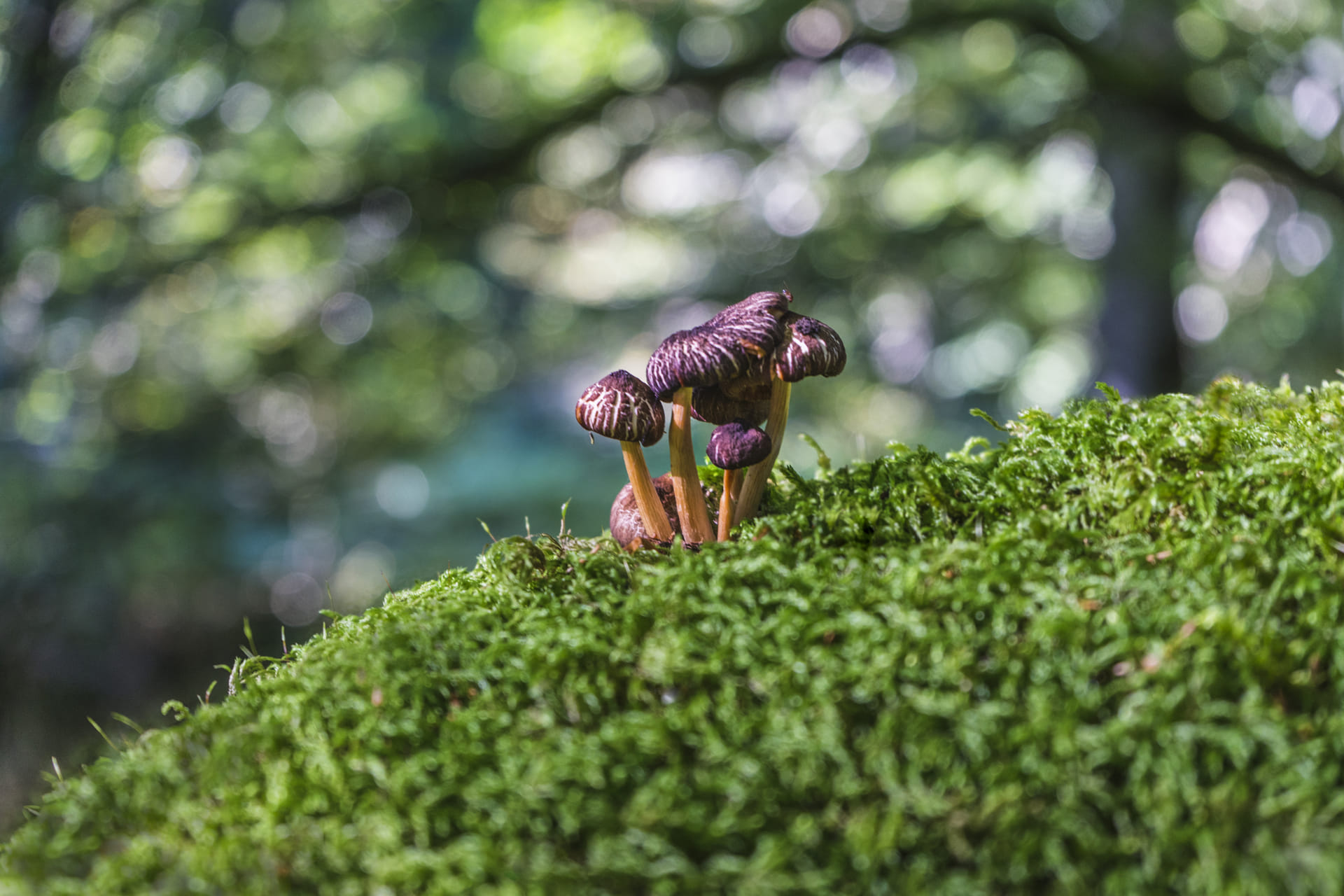 Por el Bosque de Irati