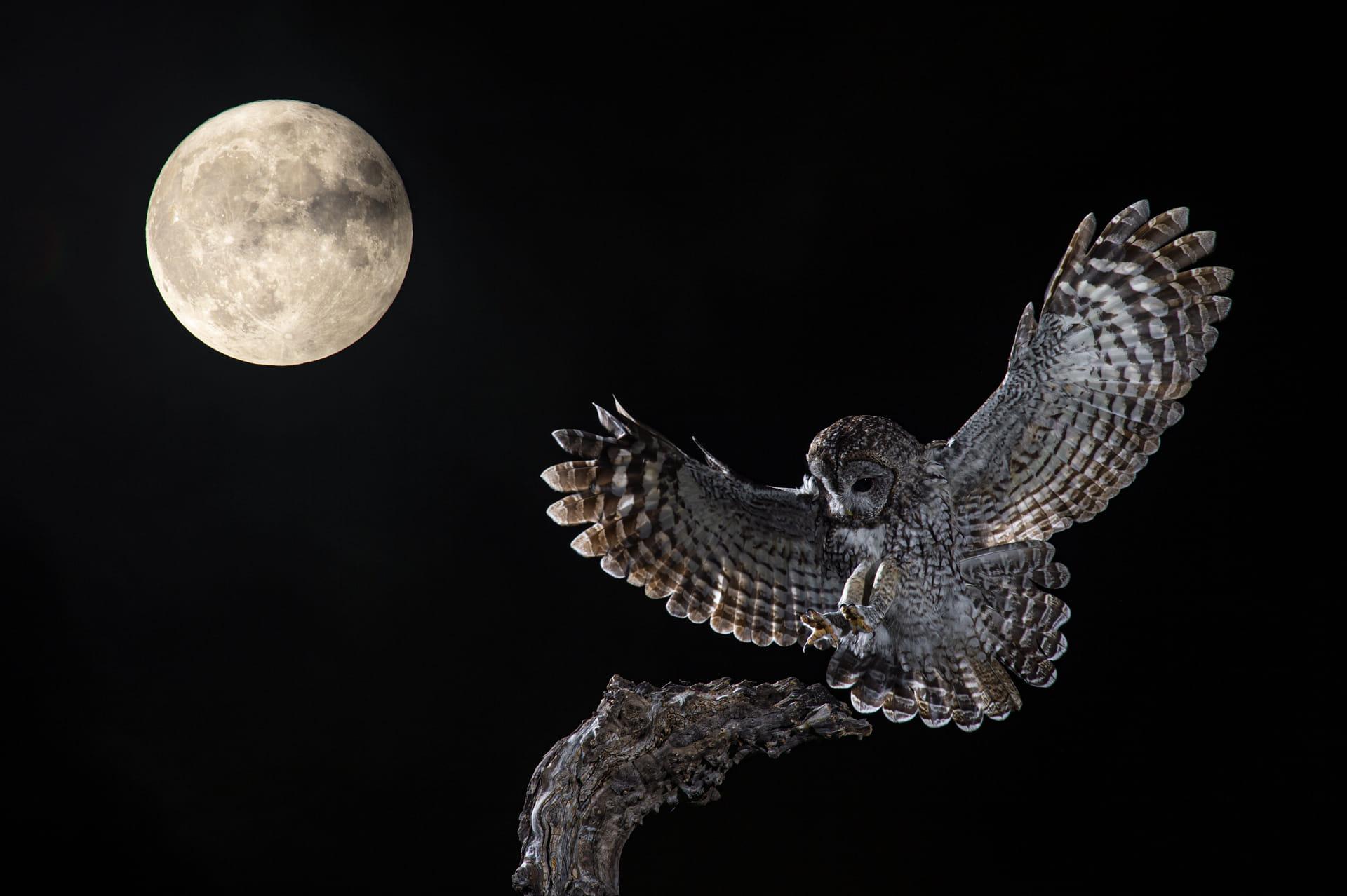La luna y el cárabo