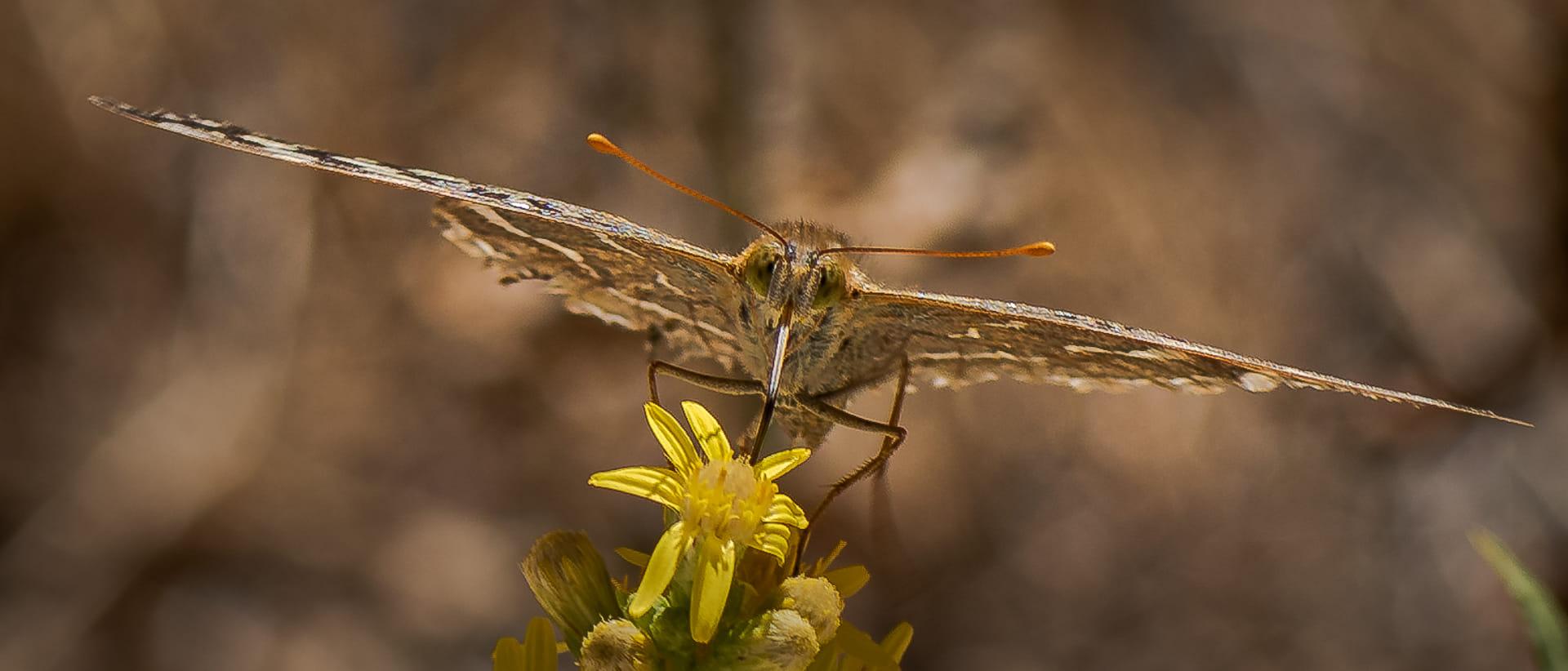 Mariposa en  su Hábitat