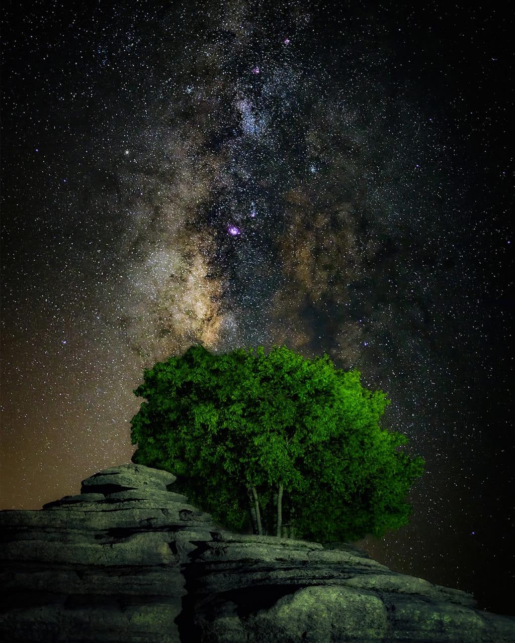 Árbol Galáctico