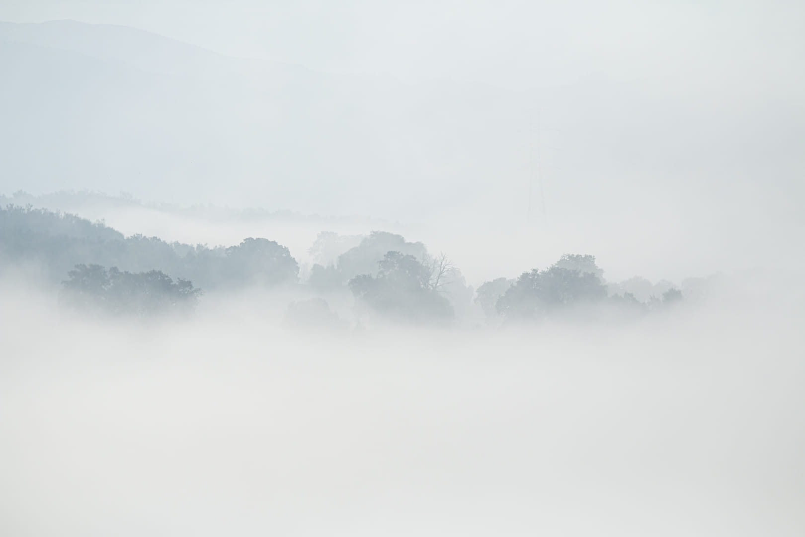 Neblinas