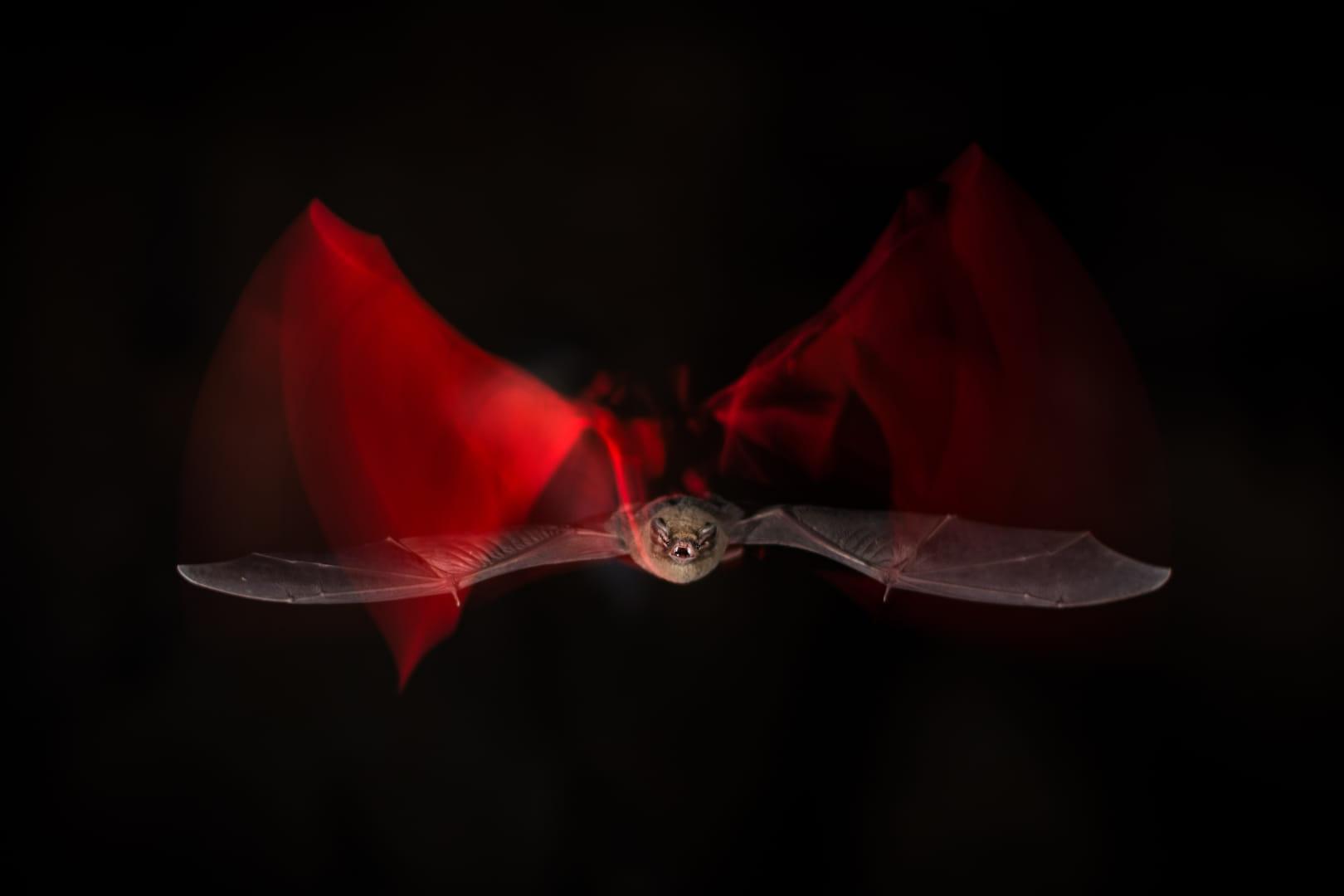 Bat action II