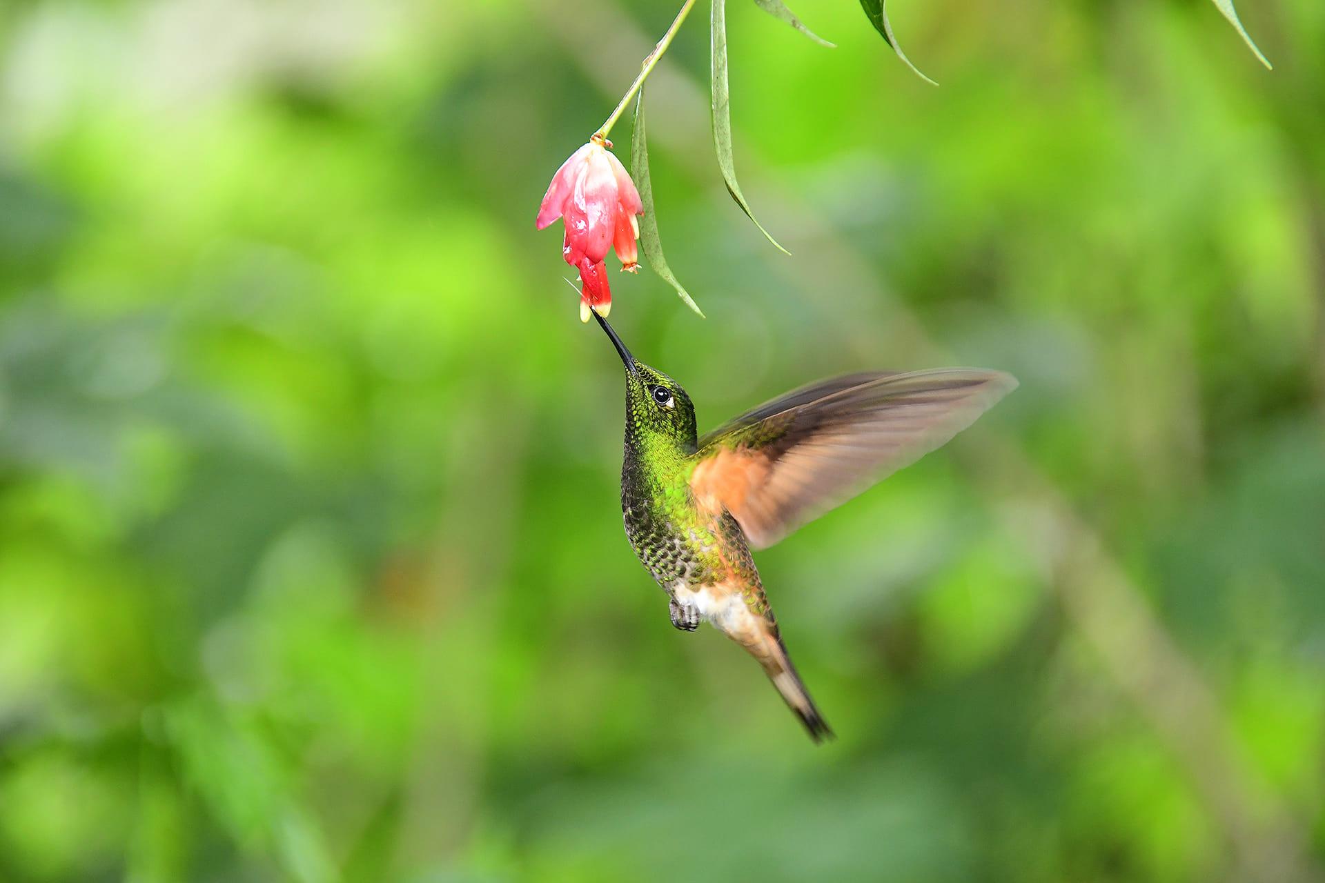 Experto en Nectares