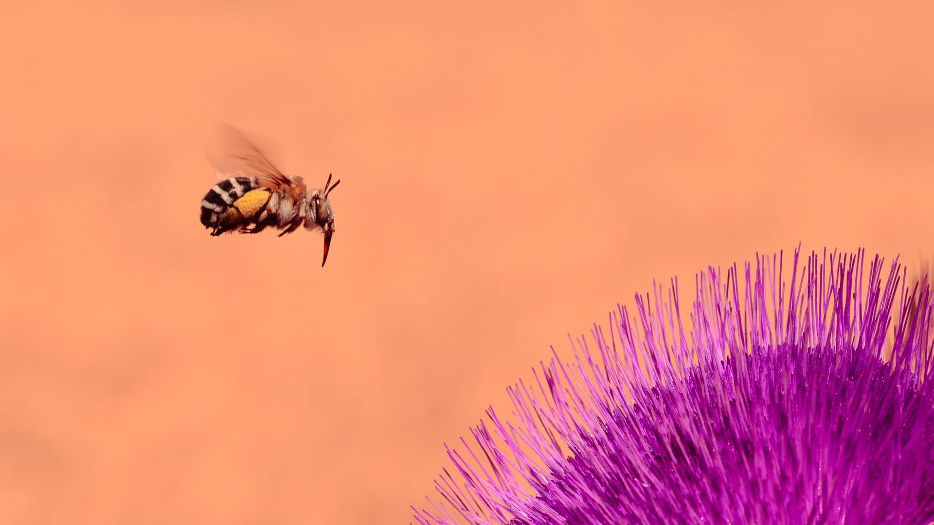 ei caldo y la abeja