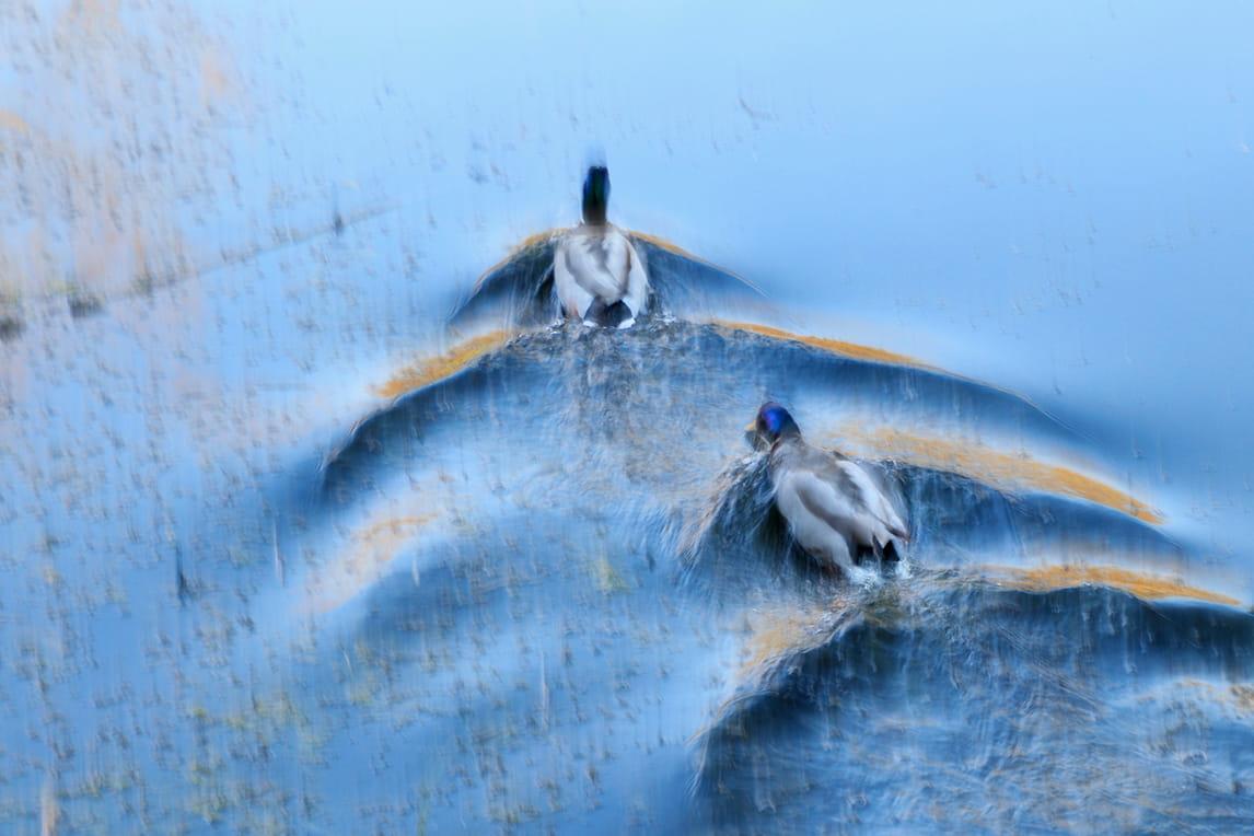 Estelas en el agua