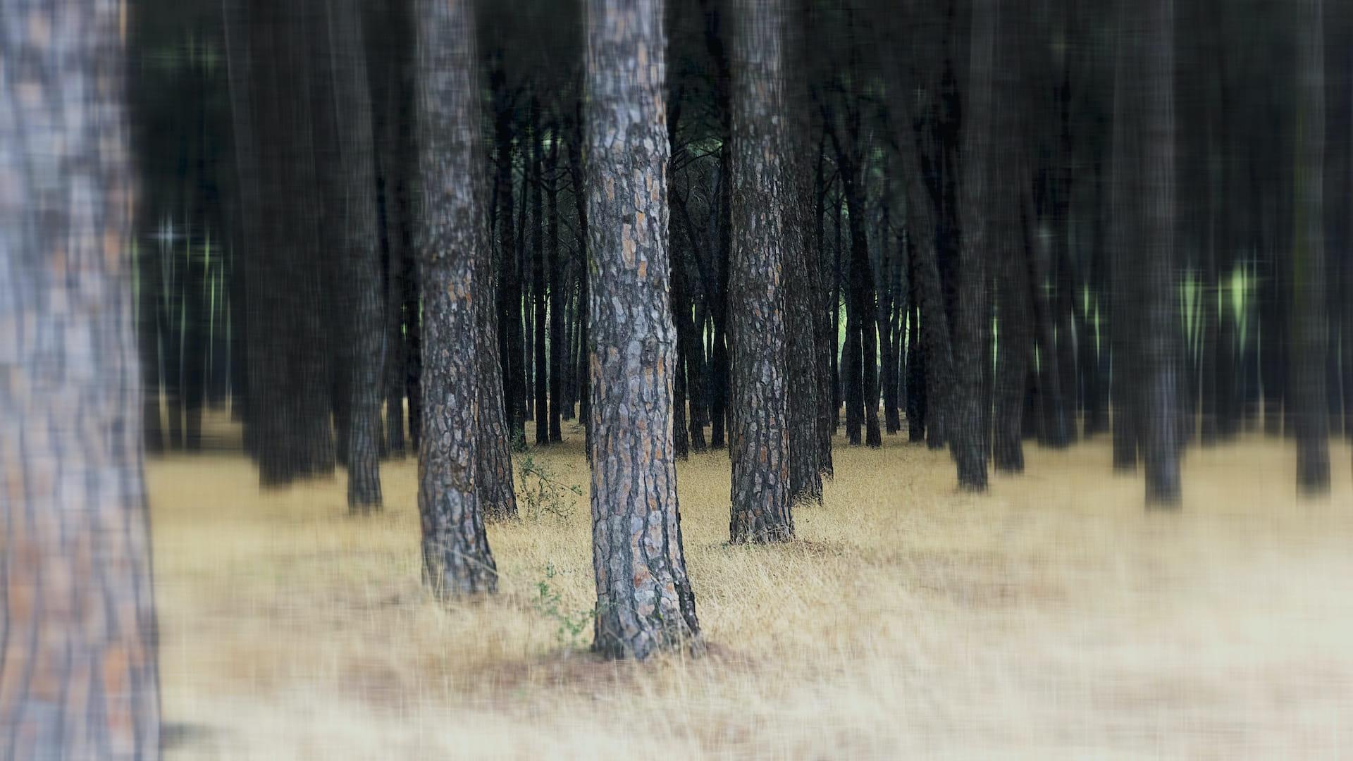 Hermano árbol