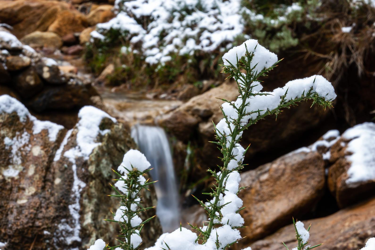Invierno en Sierra Bermeja