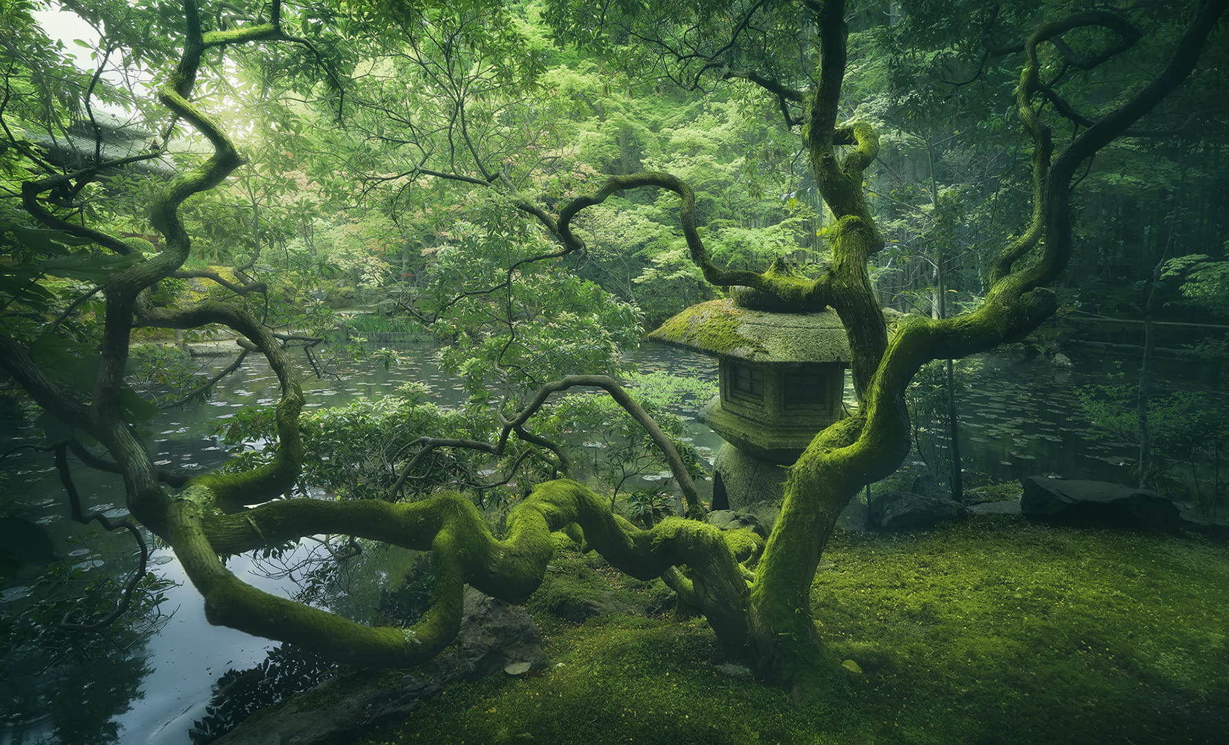 The Japanese Tree