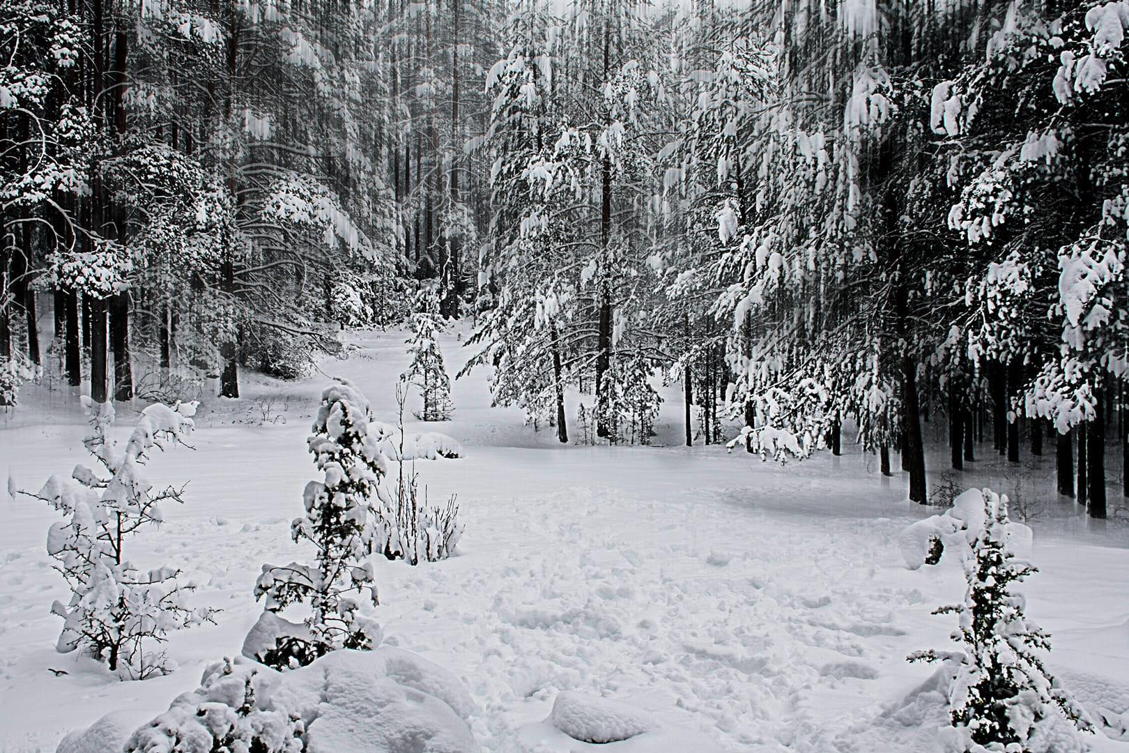 Año de Nieve