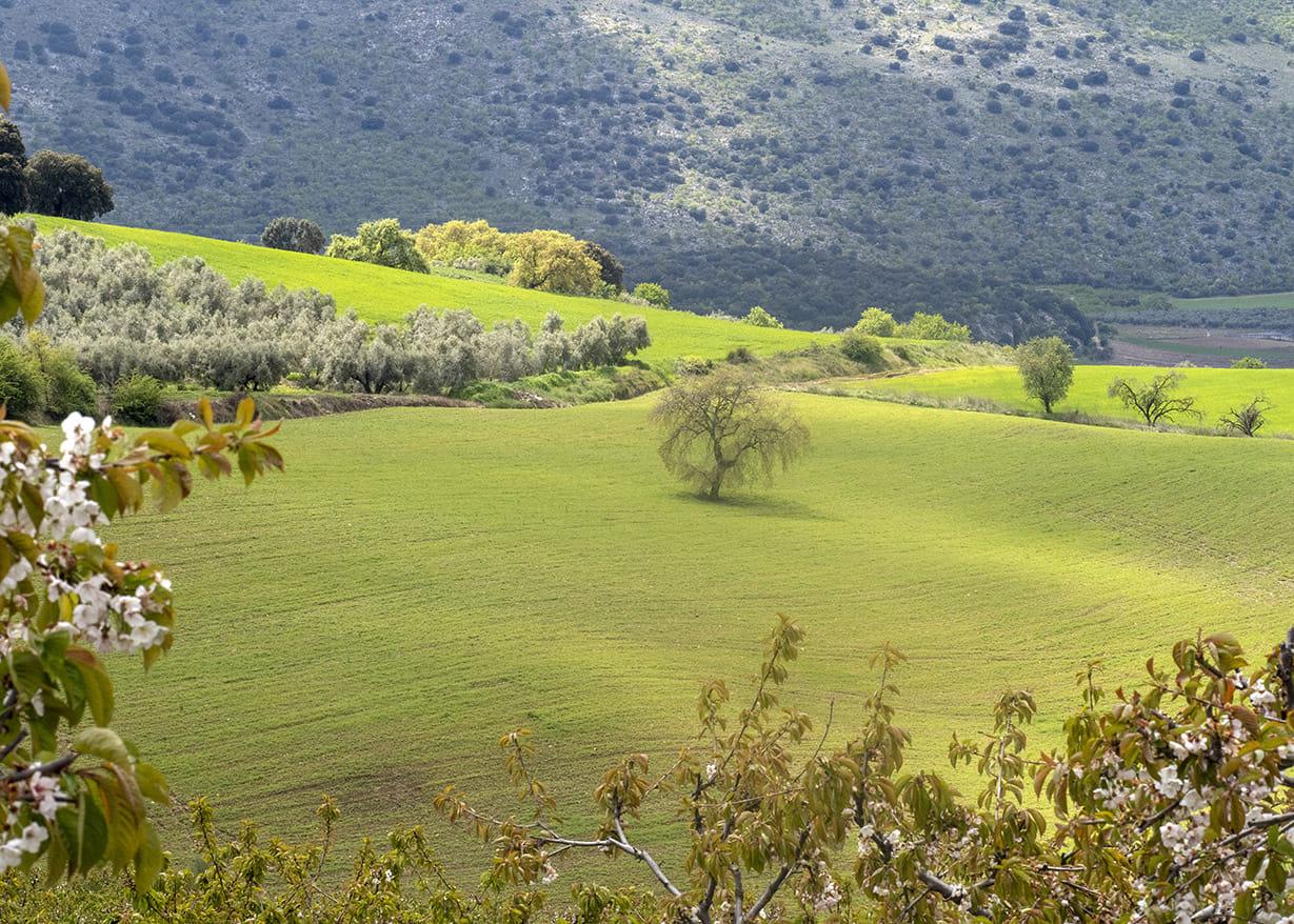 Verde y blanco... Andalucía.