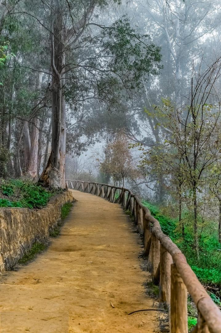 De mis paseos por Oromana.