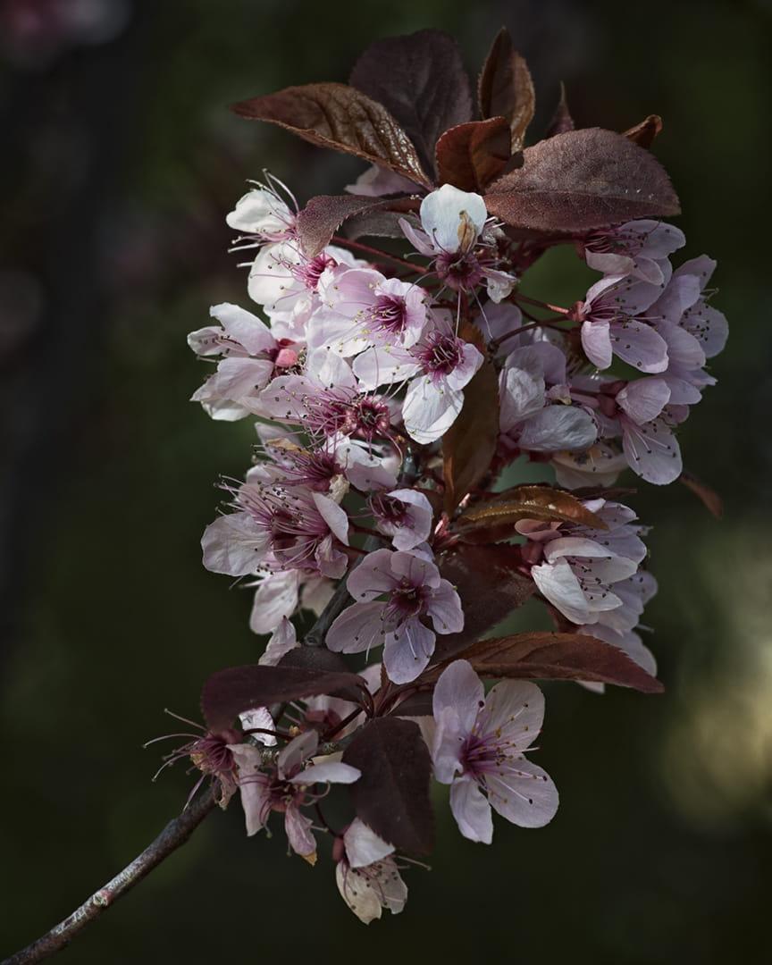 Primera primavera