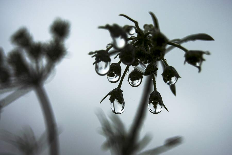 Lágrimas de flor