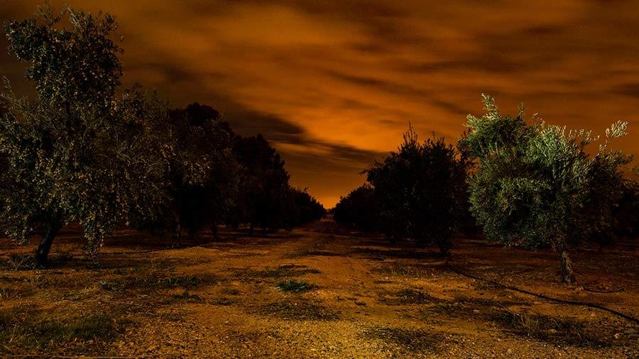 paz en olivos