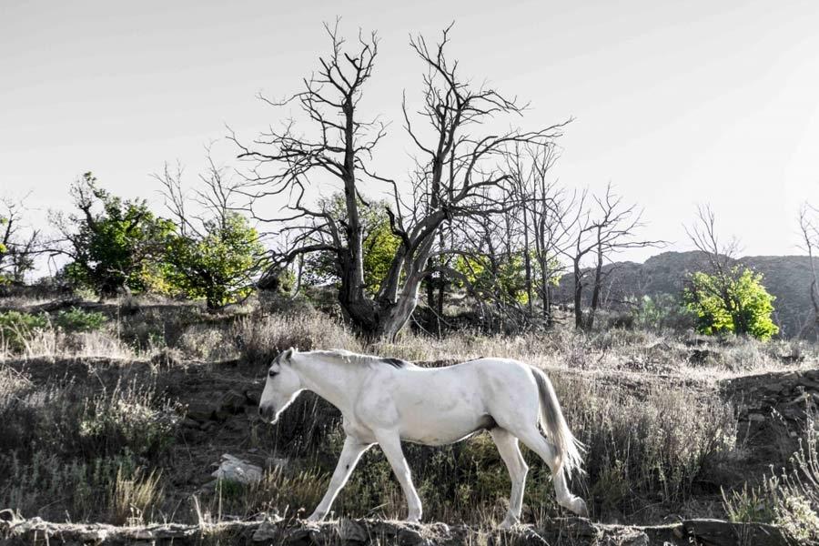 """""""... y el caballo en la montaña""""."""
