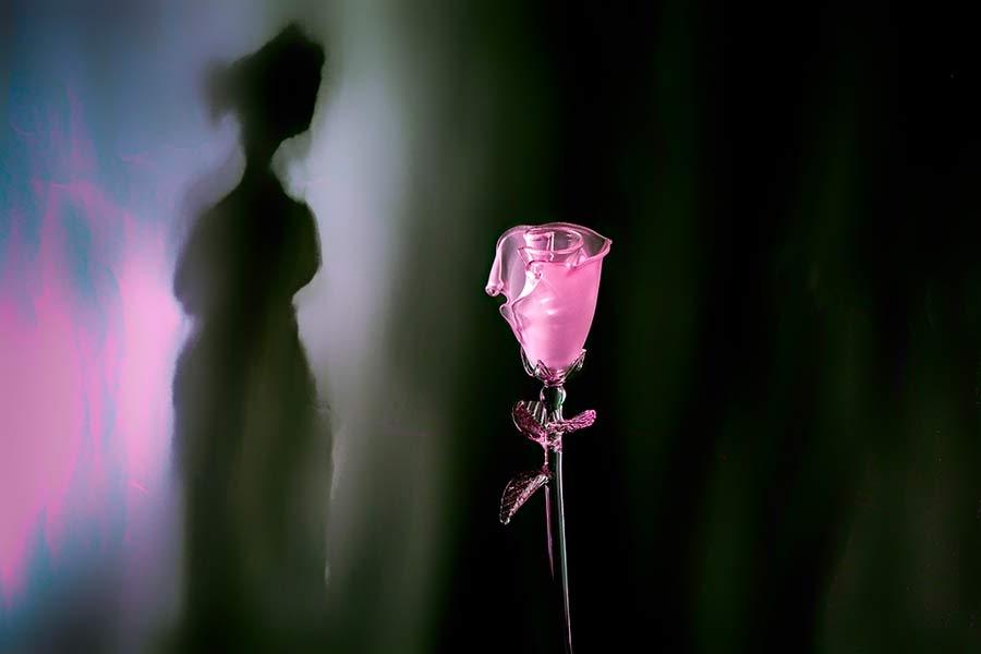 La sombra de una flor