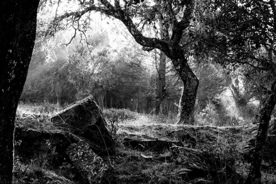 Claroscuros del Bosque