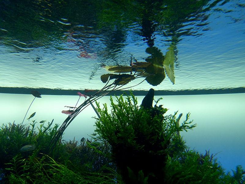 Pradera acuática