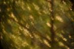 El Bosque de las Libélulas