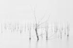 Bosque eterno
