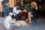 Celebración del día de la mascota en Sevilla