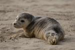 fauna en playas