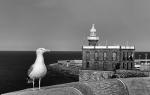 """""""La mirada del albatros"""""""