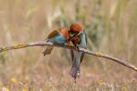 Las aves también aman