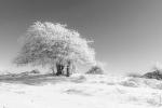 Árbol cubriendo sus ramas con fundas de hielo