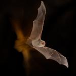 Bat action III