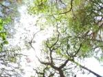 Bosque en movimiento